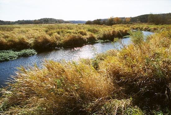 Agricultural buffer along Black Earth Creek