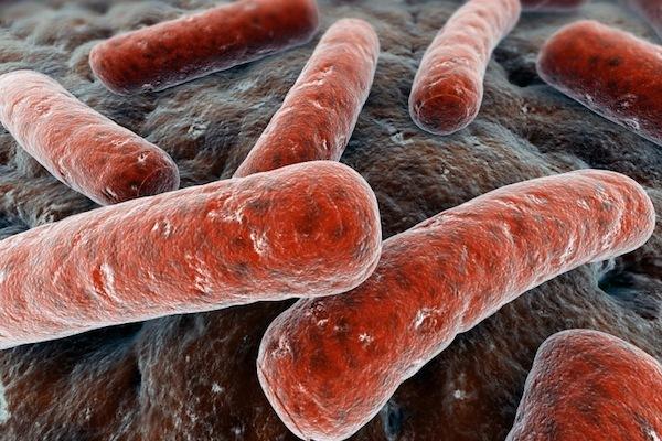 Photo: E. coli bacteria