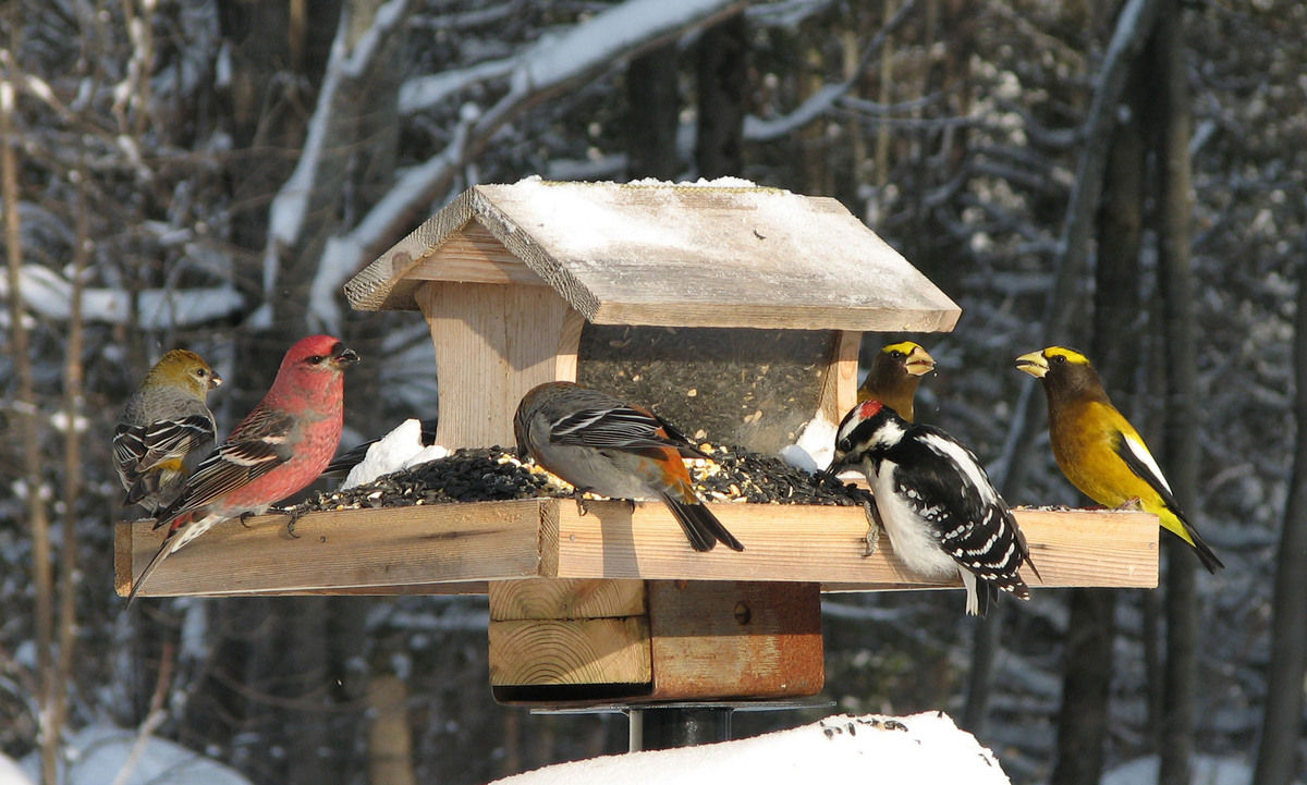 Photo: Winter birds at a bird feeder