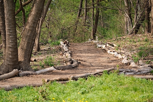 Photo: Lakeshore Path