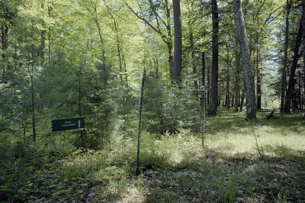 Photo: Trees growing inside exclosure protecting them from deer