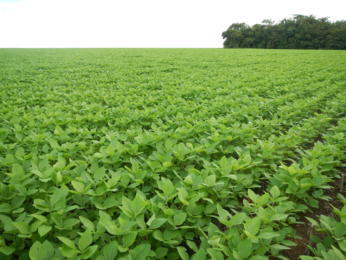 Photo: Soybeans grow near a forested area in the Brazilian state of Mato Grosso.
