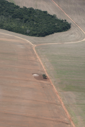 Photo: An island of forest in a sea of soy agriculture in Mato Grosso
