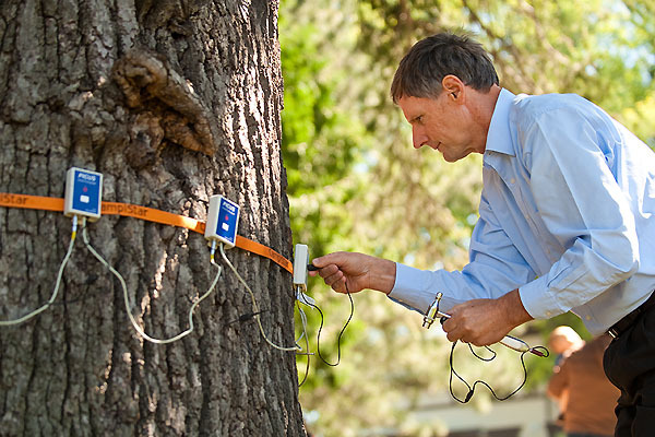 Photo: Bruce Allison performs an acoustic tomography scan on the tree