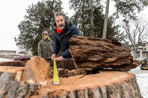 Photo: Daniel Einstein counting stump's rings