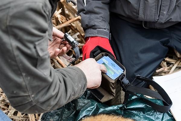 Photo: Testing a radio collar
