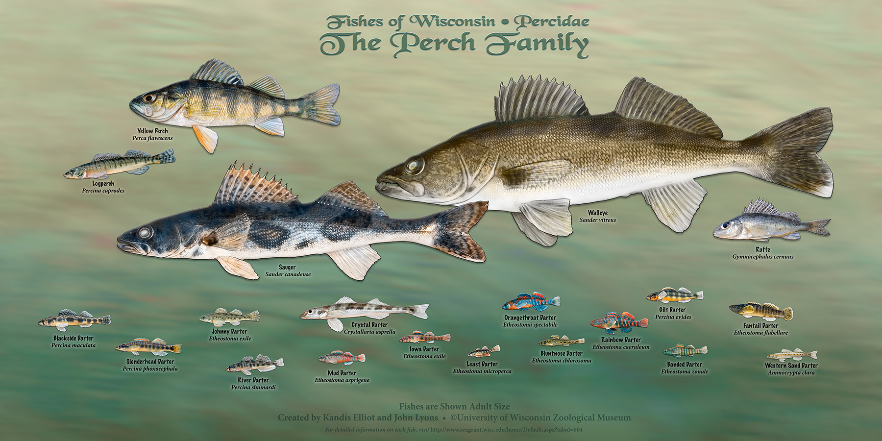 Wisconsin\'s fish – all of them – star in new poster series