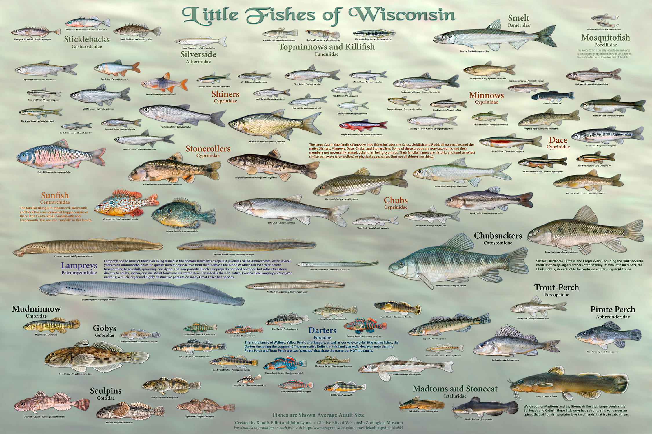 wisconsin s fish all of them star in new poster series